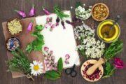 animation atelier bar à fleurs et plantes comestibles toit de paris