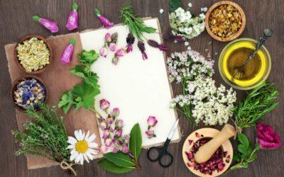 Atelier Bar à fleurs et plantes comestibles