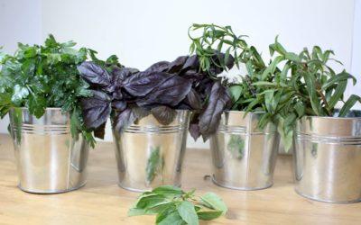 Atelier Bar à herbes aromatiques