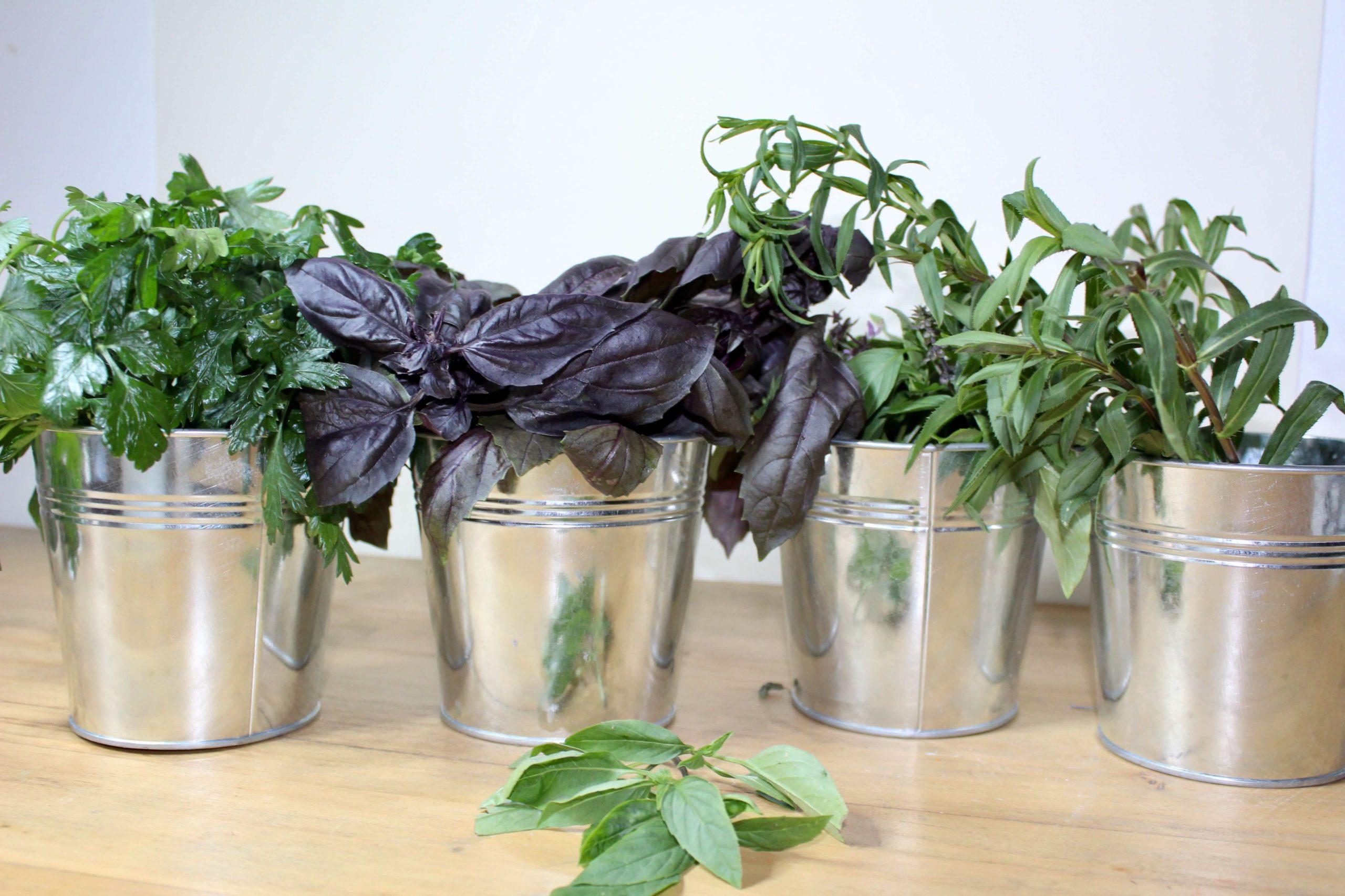 Bar à herbes aromatiques atelier